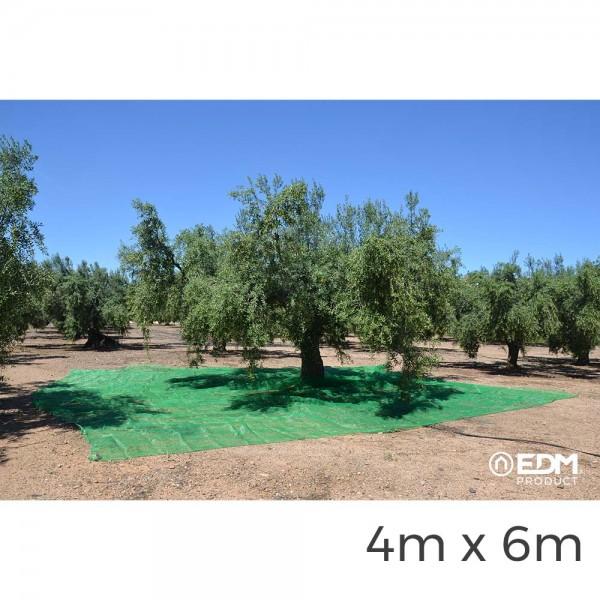 Manto para recoleccion verde aceituna 4x6m
